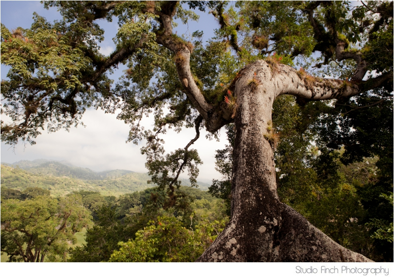 Honduras Tree Travel Photography