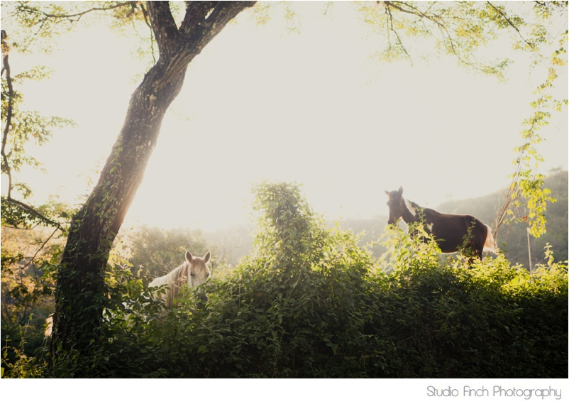 Honduras HorsesTravel Photography
